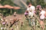 apiculture-st-marcel-klebert-66-907756