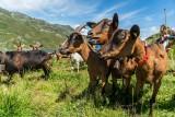 montee-en-alpage-2020-chez-pepe-nicolas-vincent-lottenberg-28261-5633864