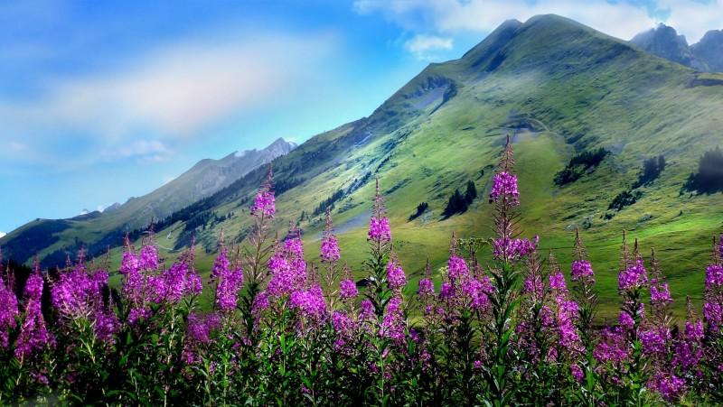visite-alpage-bureau-des-guides-899210